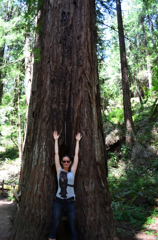the redwoods are so tall in Muir Woods