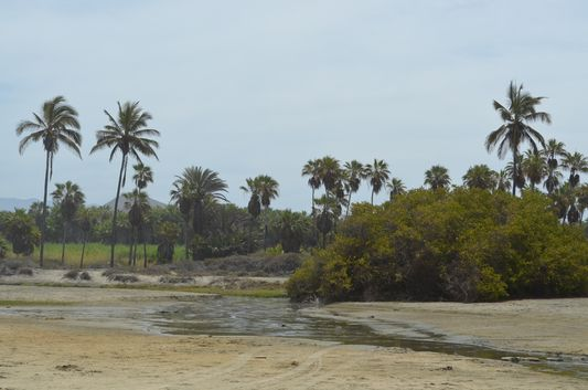 the river and the palm trees on the Las Palmas beach