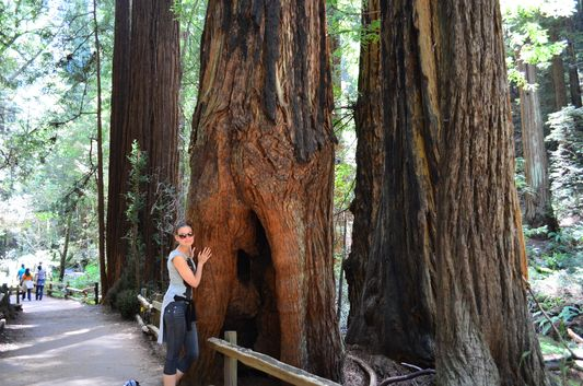 walking through the Cathedral Grove in Muir Woods