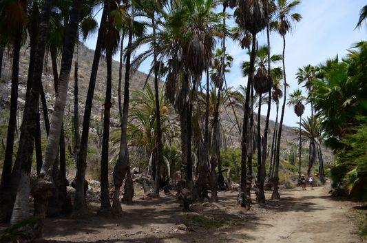 walking through the palm tree grove