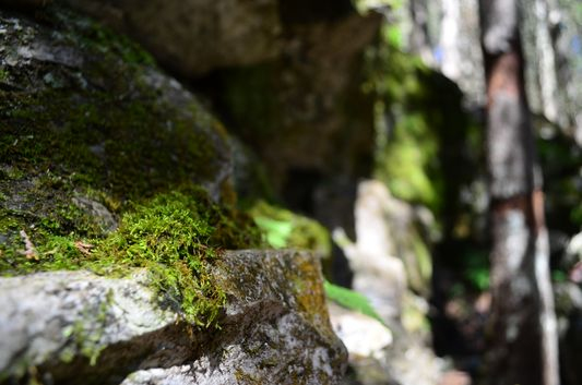 rocks and trees covered with moss