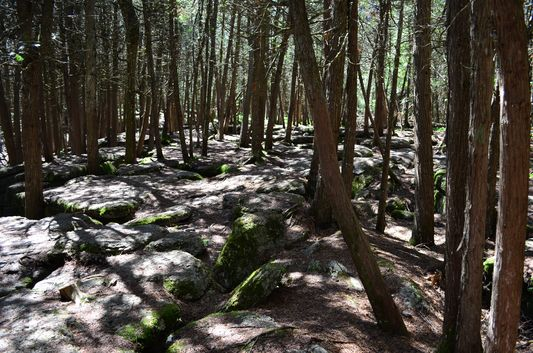 stunning forest around Warsaw Caves Conservation Area
