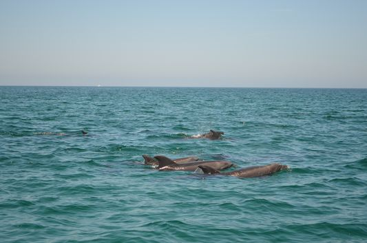 a dolphin family swimming next to us on the way back to La Paz
