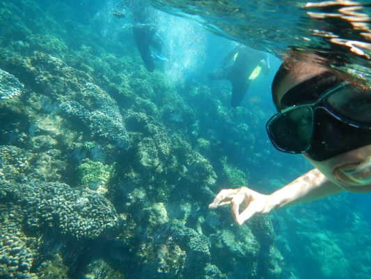 observing corals when snorkeling