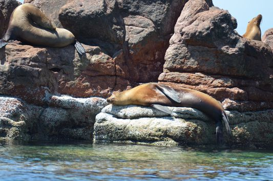 sea lions in sea lion colony on Isla Espiritu Santo