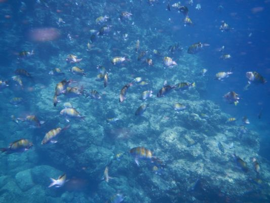 watching fish when snorkeling on Isla Espiritu Santo
