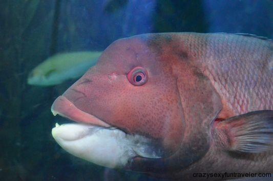 a fish staring at me