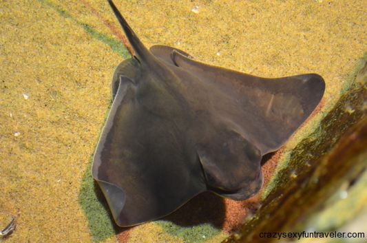 a small stingray you could touch