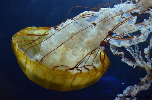 another cool jellyfish