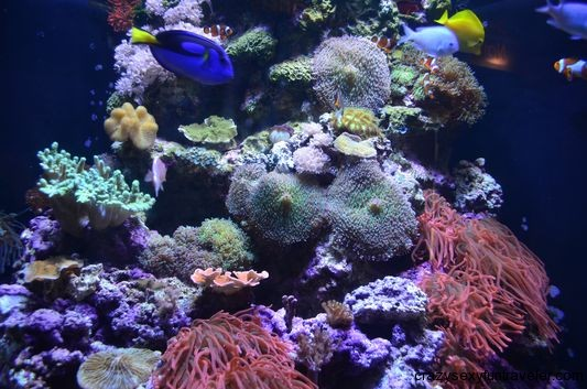 beautiful underwater world in Aquarium of the Bay San Francisco