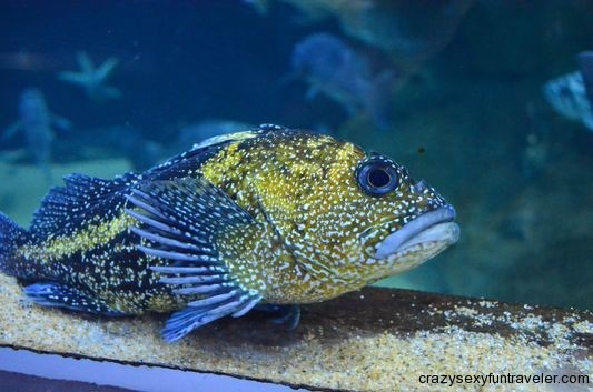charming fish