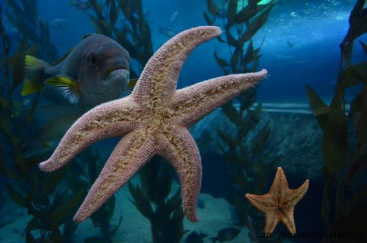 fish and starfish in Aquarium of the Bay San Francisco