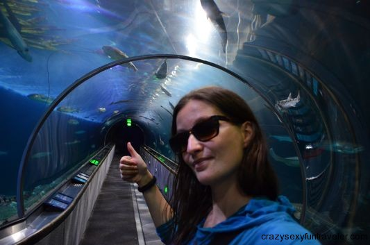 in the crystal clear tunnel in Aquarium of the Bay San Francisco