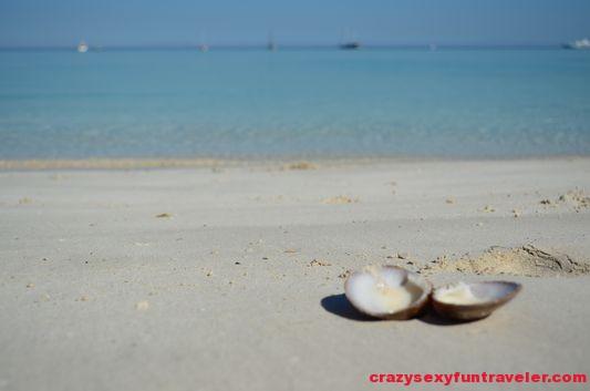 a seashell on the beach
