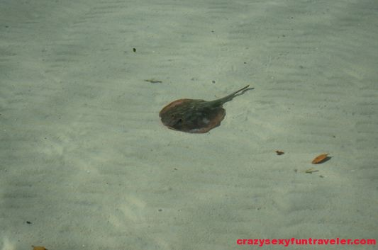 a stingray  to be careful of