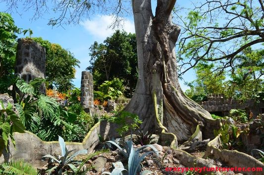 the famous tree in Golden Rock Inn Nevis