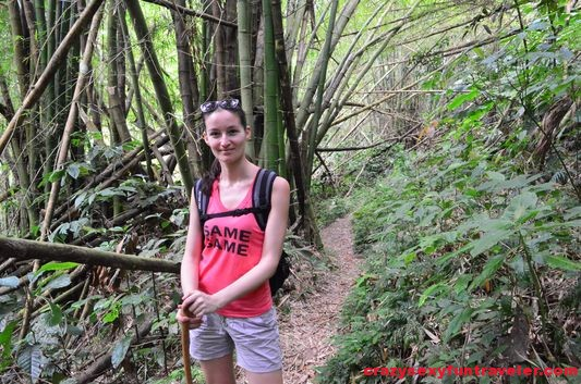 trekking around bamboo trees