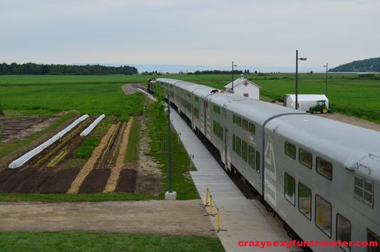 a little garden and Le Massif train