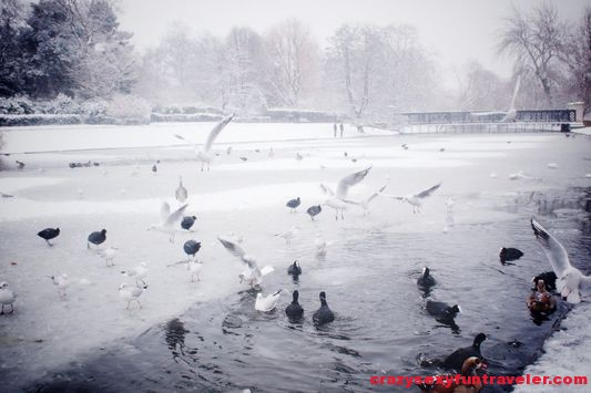 ducks and seagulls in Regents Park