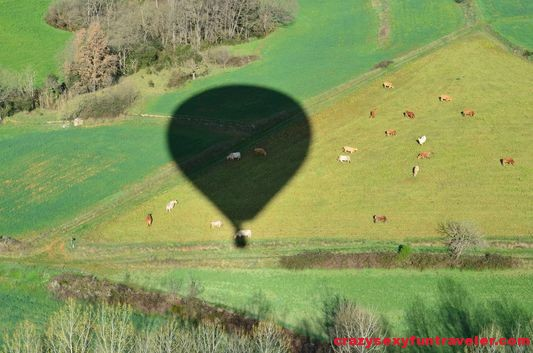 hot air balloon shadow over the cows