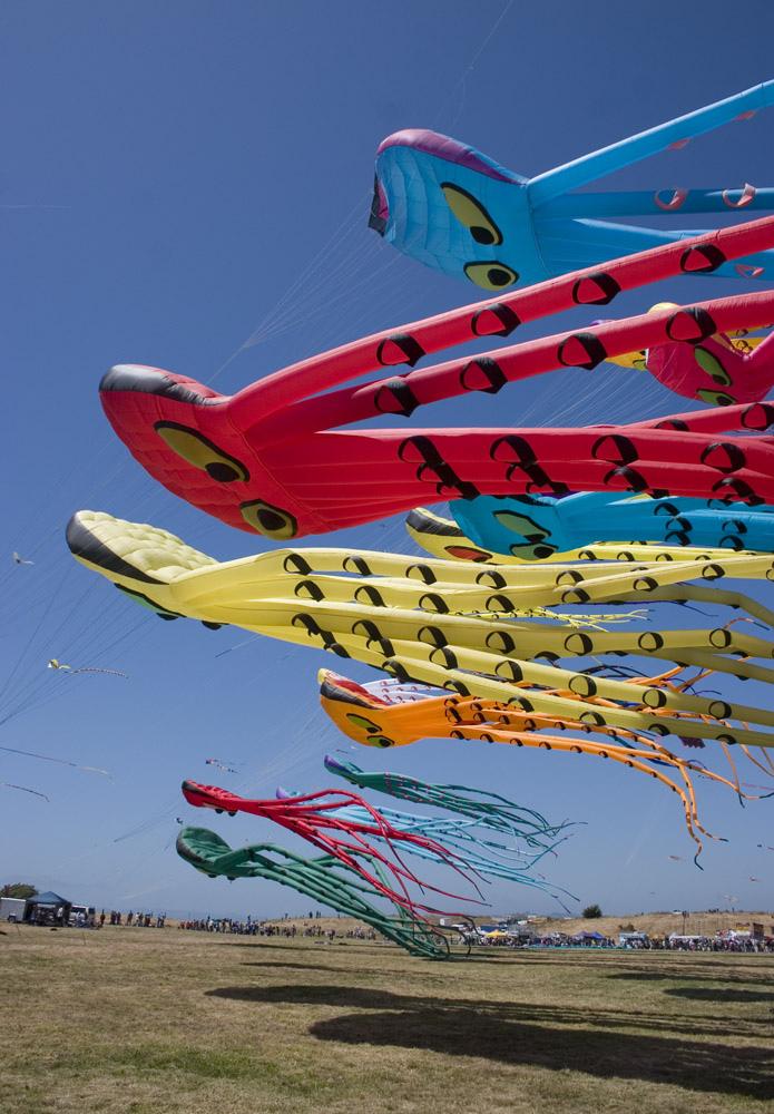 Kite Festival of Jainpur