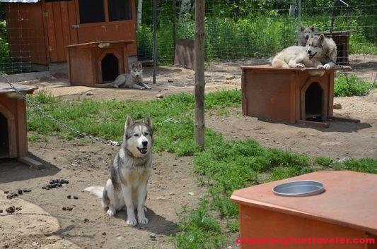 Canine village Les Secrets Nordiques Mont-Sainte-Anne (5)