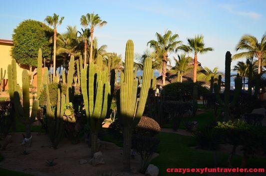 cacti in Posada Real in San Jose del Cabo