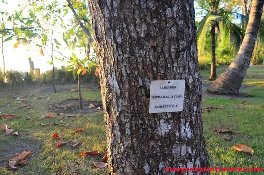 Blue Osa plant tags
