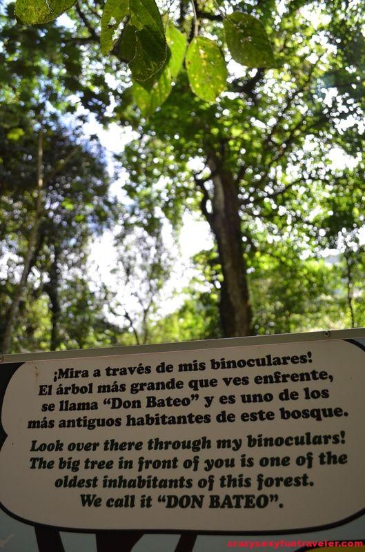 Canopy Adventure in El Valle de Anton (20)