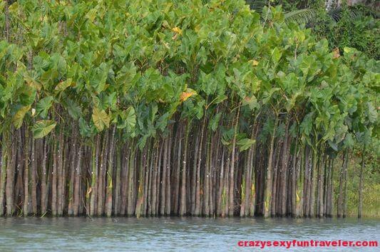 Chagres river Panama Canal Gatun lake (12)