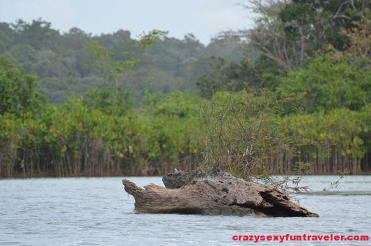 Chagres river Panama Canal Gatun lake (14)