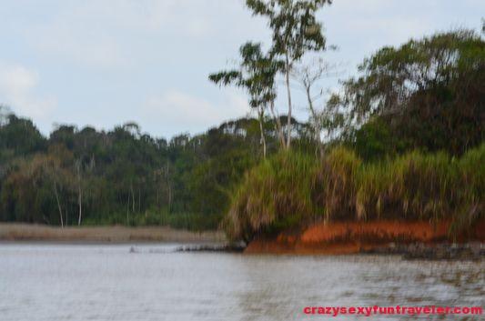 Chagres river Panama Canal Gatun lake (6)