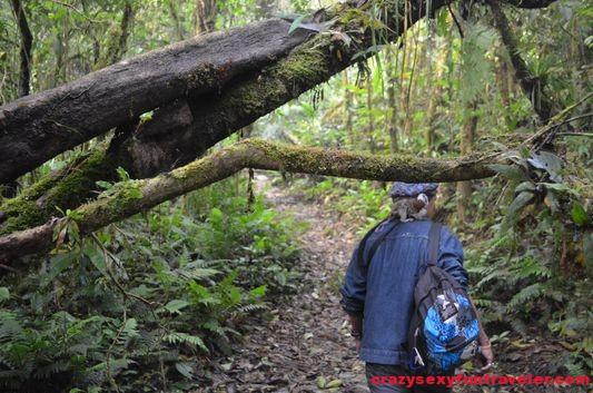 hiking Caracoral in El Valle de Anton with El Chakal (12)