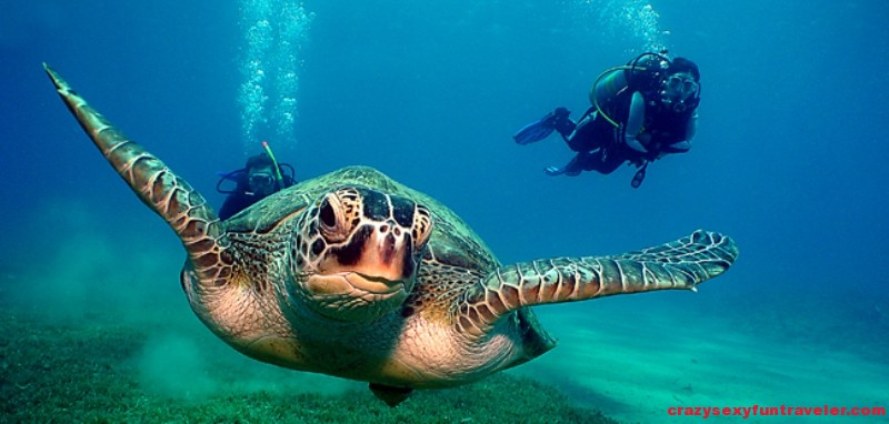 Fuerteventura-Diving