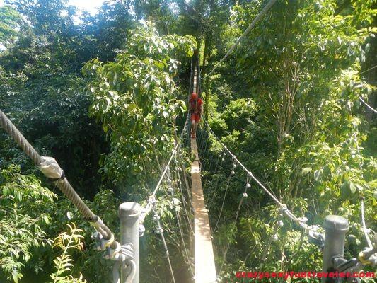 Red Frog Beach Bastimentos Sky Zipline Canopy Tour (12)