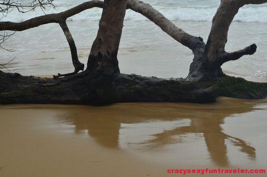 Turtle Beach Bastimentos (1)