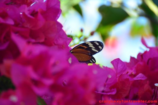 a butterfly wildlife Osa Peninsula