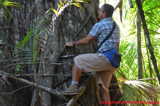 strangle tree Osa Peninsula