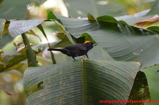 Congo Bongo in Manzanillo (19)