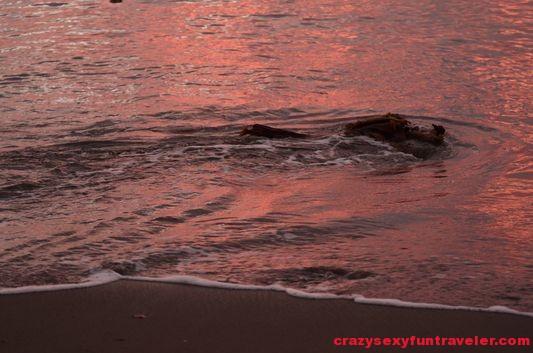 Puerto Jimenez Osa Peninsula Blue Osa sunrise (56)