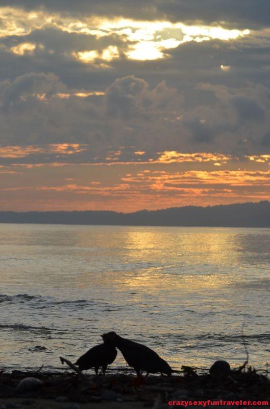 Puerto Jimenez Osa Peninsula Blue Osa sunrise (68)