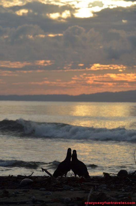 Puerto Jimenez Osa Peninsula Blue Osa sunrise (69)
