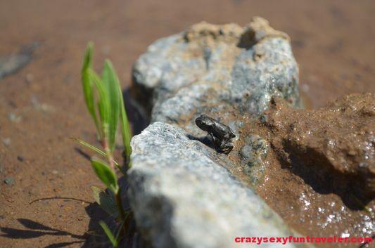 Salamandra Resort Banska Stiavnica (23)