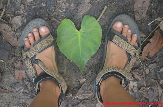 huge heart-shaped leaves in jungle in Costa Rica