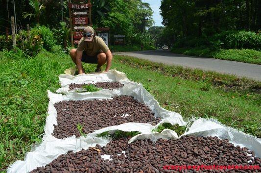 Caribeans chocolate Puerto Viejo (2)