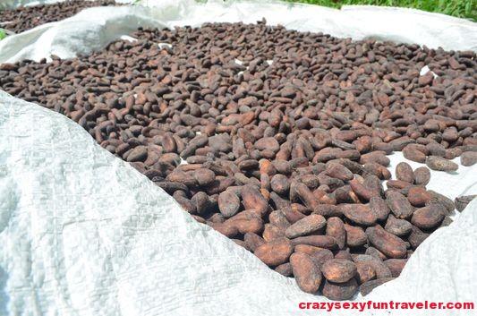 Caribeans chocolate Puerto Viejo (3)