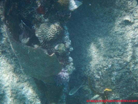 Isla Perro San Blas trip Cacique Cruiser (120)