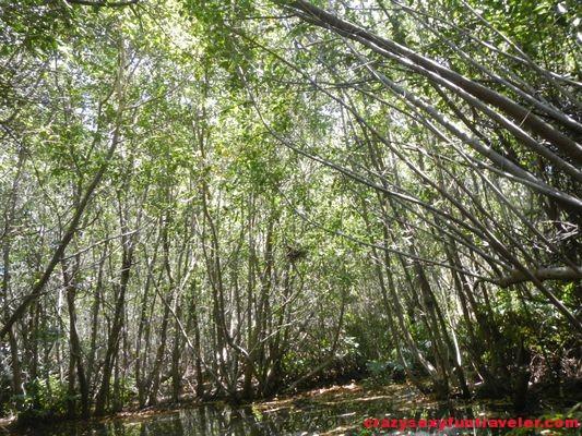 Hacienda Tres Rios Mexico (97)