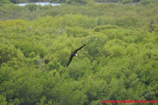 Contoy Island in Mexico (18)