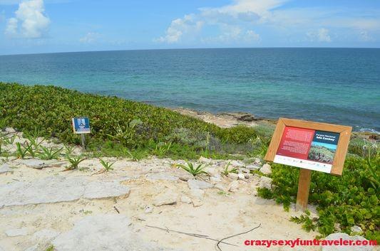 Contoy Island in Mexico (46)
